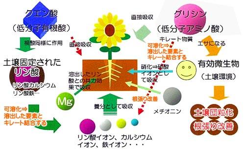 ソイルマスターによる土壌のデトックス効果
